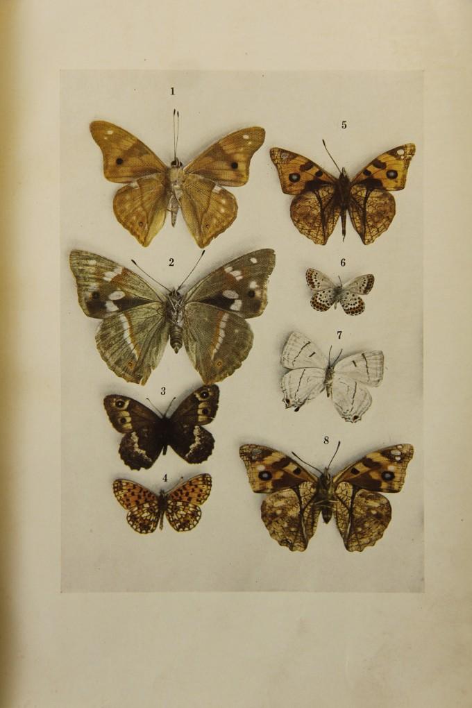 석주명이 1939년 발간한 '조선산 접류 총목록' 속 컬러 나비 사진. 이 책은 일제강점기 조선 과학자가 영문으로 집필한 유일한 책이다. 사진 제공 국회도서관