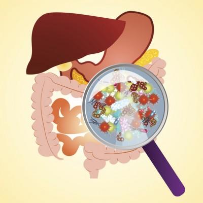 소화·면역 돕는 장내 미생물 '암세포' 증식도 막는다