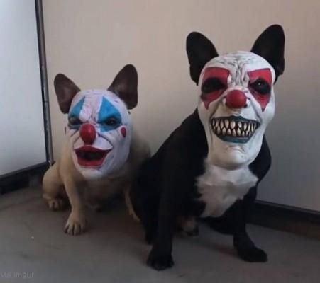 세상에서 가장 무서운 개