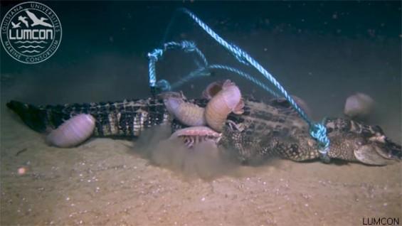 해저 2천 미터, 악어를 먹는 갑각류들