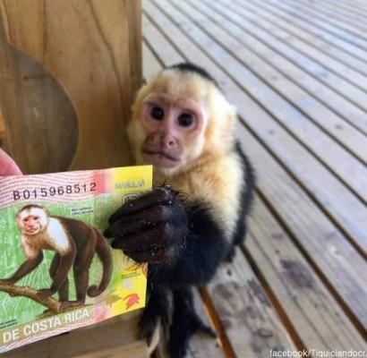 돈을 쥔 원숭이'신기하네'