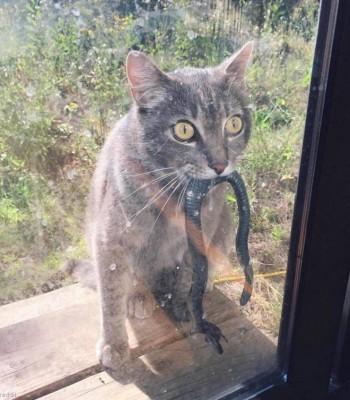 """""""고양이는 맹수다"""""""