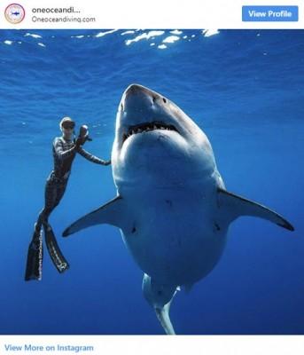 하와이에서 촬영된 거대 상어