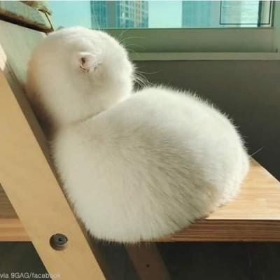 눈사람을 닮은 고양이 '인기'