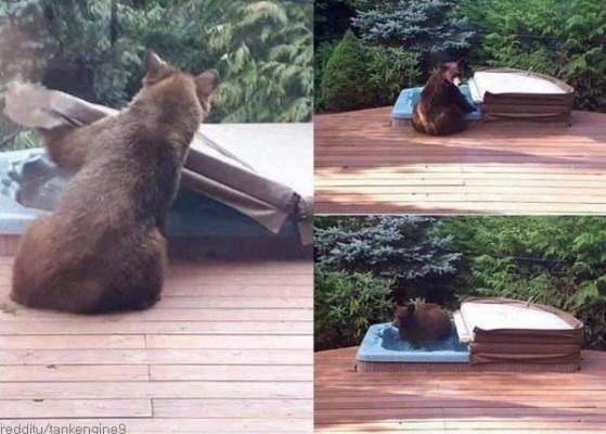 남 몰래 목욕하는 곰
