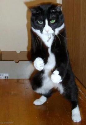 사람 때려 눕힐 듯한 고양이