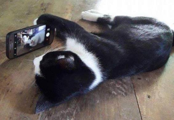 자연스럽게 셀카 찍는 고양이