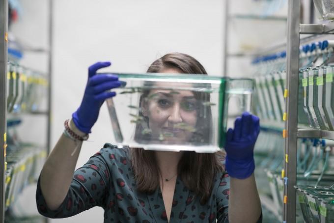 로라 폰데나스 박사후연구원이 실험에 사용한 제브라피시를 들고 있다. 버지니아대 제공
