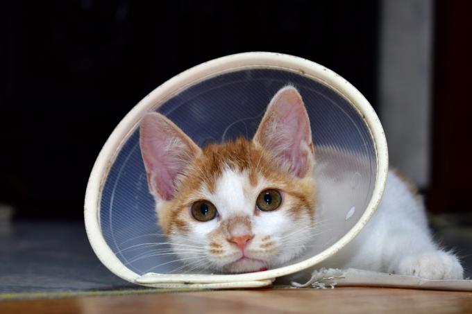 [애니멀리포트] 안절부절 못하는 고양이, 때가 왔다