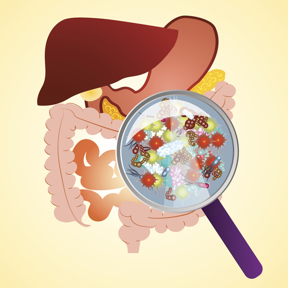 장내미생물이 면역계를 활성화시켜 암세포 증식을 방해한다는 연구결과가 나왔다. 게티이미지뱅크 제공