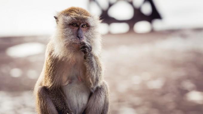 원숭이 뇌에 초음파를 가해 의사결정에 영향을 줄 수 있다는 연구결과가 나왔다. 게티이미지뱅크