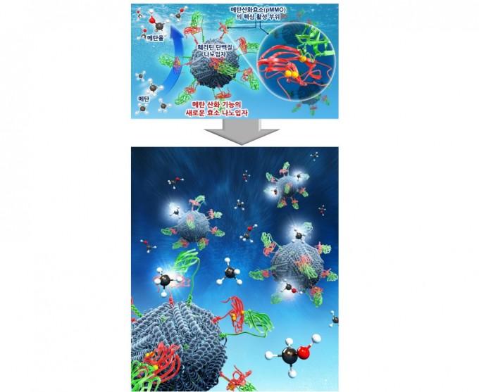메탄산화세균 유래의 메탄산화효소의 핵심 활성 부위가 표면에 표출된 새로운 효소 나노입자를 개발했다.이를 통해 메탄가스로부터 메탄올을 손쉽게 생산할 수 있다. 한국연구재단 제공
