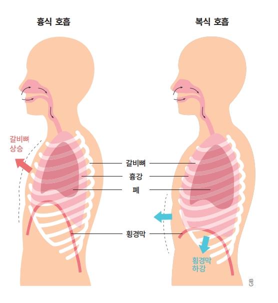 흉식 호흡과 복식 호흡. 호흡은 크게 갈비뼈를 들어 올려 숨을 들이마시는 흉식 호흡과 횡격막을 내려 숨을 들이마시는 복식 호흡으로 나눌 수 있다. 갈비뼈를 들어 올리기보다는 횡격막을 아래로 내리는 것이 더 넓은 흉강을 확보해 노래를 안정적으로 부르는 데 도움이 된다