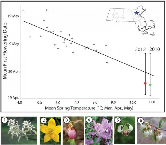 소로(1852~1858)와 그의 후계자 에드워드 호어가 식물을 관찰하던 때(1878, 1888~1902년)와 2000년대 프리맥 교수와 동료들이 활동하던 때(2004~2006, 2008~2012)의 콩코드의 평균 봄 기온(가로축)과 평균 개화일(세로축)을 나타낸 그래프다. 소로가 활약할 때 봄의 평균 기온은 5.5도였고 평균 개화일은 5월 15일이었지만 2000년대 평균은 각각 8.8도와 5월 4일로 바뀌었다. 아래는 콩코드에 자생하는 식물의 꽃으로 왼쪽부터 캐나다채진목, 동의나물, 분홍개불알꽃, 캐나다진달래(학명 Rhododendron canadense), 세르눔연영초, 블루베리다. ′플로스 원′ 제공