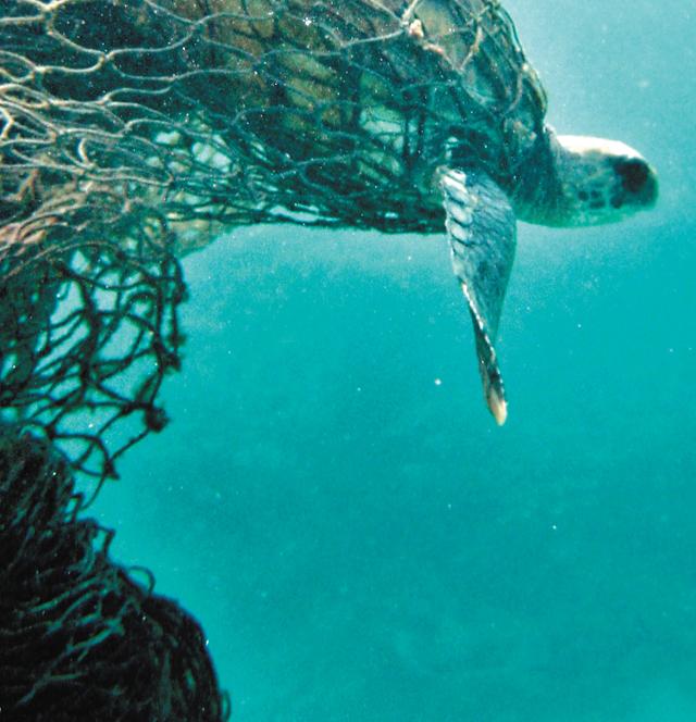1월 스위스 다보스에서 열린 세계경제포럼에서 공개된 자료에 따르면 태평양과 대서양, 인도양, 지중해, 흑해에 인접한 192개국은 2010년 기준 25억 t의 고체 쓰레기를 배출한다. 이 중 플라스틱은 2억7500만 t에 이르고 여기서 약 800만 t은 해양으로 유입된다. 해안에서 30마일(약 48km) 이내에 사는 20억 명이 1억 t의 플라스틱 쓰레기를 배출한다.