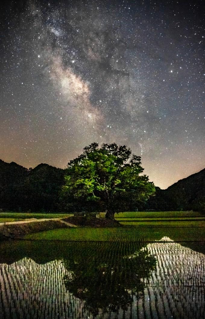 이상일 씨의 ′느티나무의 꿈′. 천문연 제공