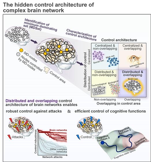 뇌의 각 영역이 분리되어 있지만 서로 연결되어 동시에 기능을 활성화한다는 것이 밝혀졌다. KAIST 제공