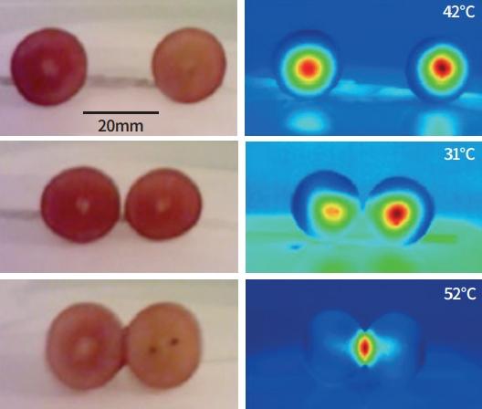 포도알 간격에 따른 온도 변화. 포도알 2개의 간격에 따라 온도가 다른 것으로 나타났다. 간격이 20㎜일 때 42도로 측정됐지만(맨 위), 포도알들이 붙어있을 때는 52도로 나타났다(맨 아래). 포도알이 가까이 있을 때 플라스마 발생도 가장 크다. Trent University