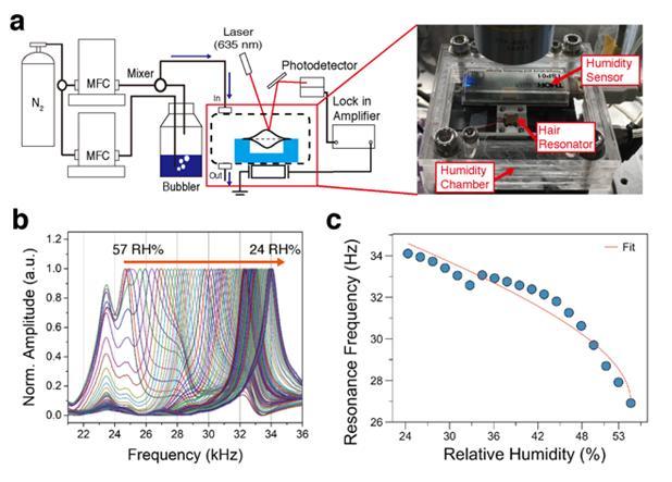 그림 3(a) 는 머리카락 공진기의 주파수 측정을 위한 광학 측정 장비와 습도 조절 챔버의 개략도이다. 그림 3(b)는 상대 습도가 57에서 24 %로 감소할 때 머리카락 공진기의 정규화 된 진폭 스펙트럼을 보여주며, 이는 그림 3(c)와 같이 나타나게 된다. 한국연구재단 제공