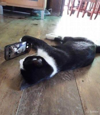 천하태평 셀카찍는 고양이