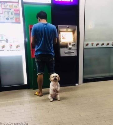 주인 지키는 충견 강아지