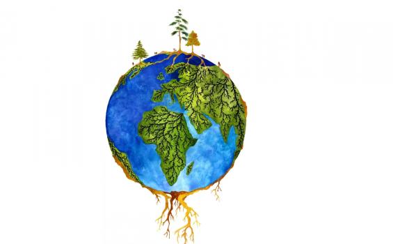 '우드와이드웹' 연결고리 뿌리곰팡이 수목 공생 첫 지도 나와