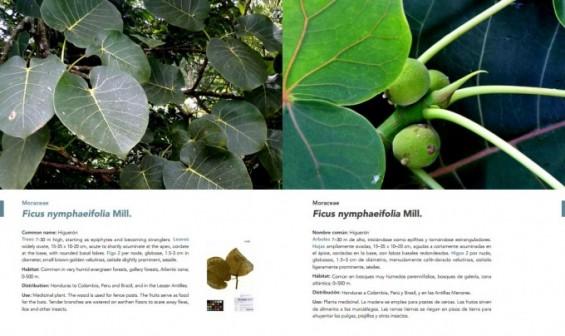 생명연, 식물자원 100종 정보 담은 '니카라과 유용식물' 도감 발간