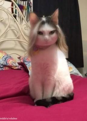 머리를 예쁘게 기른 고양이