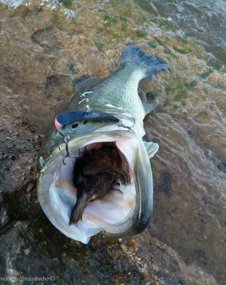 욕심 많은 물고기의 최후
