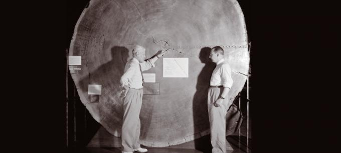 세상에서 가장 큰 나무인 자이언트 세쿼이아의 나이테로 연대를 측정하는 과학자들. Laboratory of Tree-Ring Research, The University of Arizona