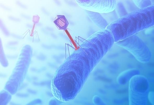 영국과 미국 연구팀이 세균 감염으로 생존률이 1%에 지나지 않았던 환자를 세균만 감염시키는 바이러스를 이용해 치료하는 데 성공했다. 게티이미지뱅크 제공