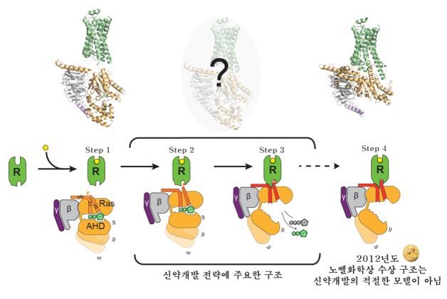 연구팀은 G단백질수용체(초록색)가 G단백질(주황, 회색, 보라색 복합체)과 결합하여 활성화되도록 유도하는 순차적 변화를 밝혔다. 2012년 노벨화학상이 수여된 구조인 4번 구조는 G단백질이 활성화된 이후의 구조이며 실제 세포 내에서 형성되는 구조가 아닐 수도 있다는 것이다. 연구팀은 오히려 G단백질이 결합한 2,3번 초기 구조가 효과적이고 안전한 신약개발 전략에 도움이 된다고 봤다. 한국연구재단 제공