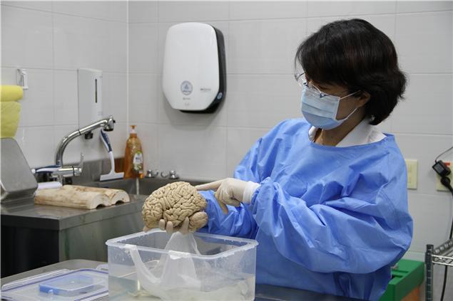 한국뇌은행 연구원이 포르말린에 고정된 대뇌반구를 들어보이고 있다. 한국뇌연구원 제공.