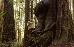 캐나다에서 가장 꼬인 나무. 위쪽은 어떤 모습일까? TJ Watt