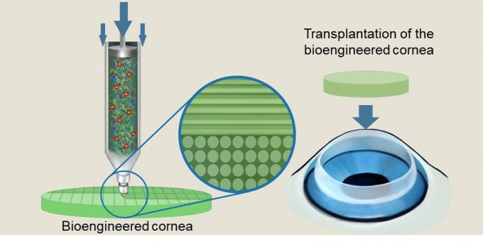 연구팀이 3D 프린팅 기술을 이용해 인공각막을 만드는 과정을 묘사했다. 바이오잉크를 출력하는 힘을 잘 조절해 실제 각막 속 생체구조를 모사했다. 사진제공 장진아 교수