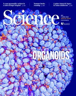 [표지로 읽는 과학] 항암·맞춤치료 혁명 가져올 '오가노이드'