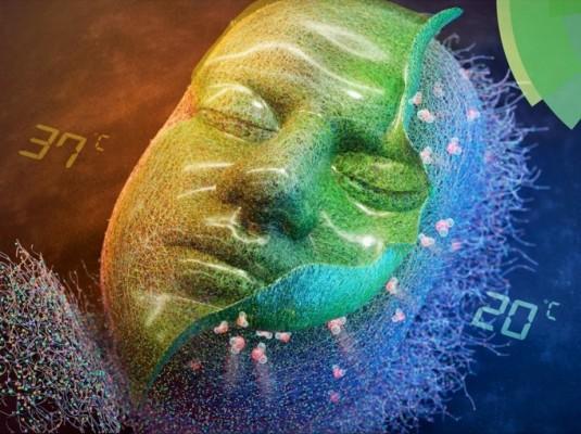 온도 제어 세포배양 기술로 인체 유래 상피세포 배양 성공