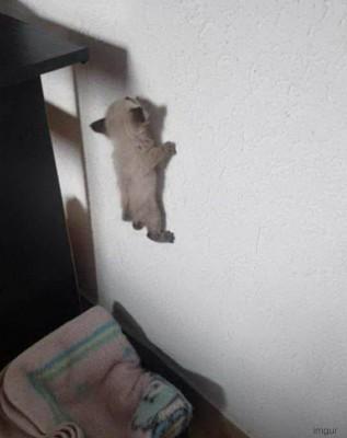 벽 타고 오르는 고양이