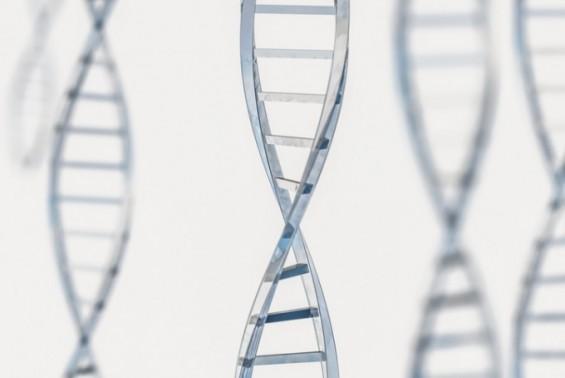 日연구진, PCR보다 증폭력 수십배 DNA 증폭 기술 개발
