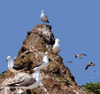 괭이갈매기 번식지인 난도는 예로부터 '알섬' 또는 '갈매기섬'으로 불렸다. 이름에도 알을 뜻하는 한자 '卵(난)'을 품고 있다. 서원수 제공