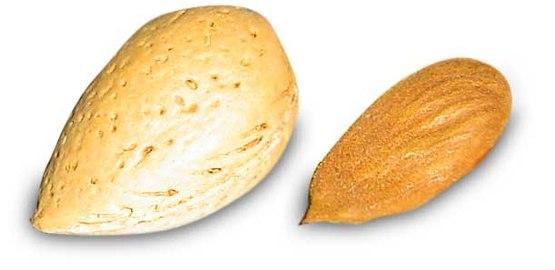 아몬드는 복숭아와 마찬가지로 열매 안쪽에 리그닌이 주성분인 두껍고 단단한 내과피(심)를 지니고 있다(왼쪽). 내과피를 쪼개면 안에 씨(인)가 들어있다(오른쪽). 위키피디아 제공
