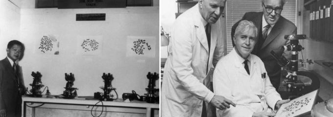1956년 코펜하겐에서 열린 국제인간유전학회에서 발표 중인 치오. (오른쪽) 알버트 레반. Victor McKusick(cc)/University of Lund