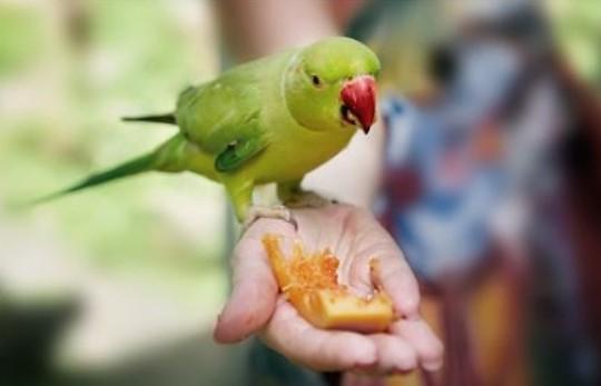 [애니멀리포트] 새도 편식을 한다