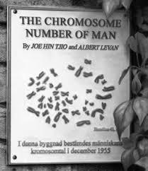 연구소에 걸린 '인간염색체 숫자'논문의 기념상패