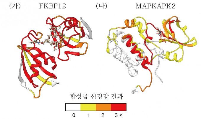 단백질 FKBP12과 MAPKAPK2을 대사응로 합성곱 신경망을 이용해 분석한  결과, 특정 지역(붉은색)에서 화합물이 더 잘 결합함을 알 수 있었다. 사진제공 GIST