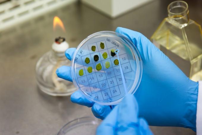 식물성 바이오매스는 광합성에 의해 빛 에너지로부터 전환된 화학에너지를 축적할 수 있는 식물자원으로 바이오연료 및 화학소재의 원료로 사용할 수 있다. 남윤중 제공