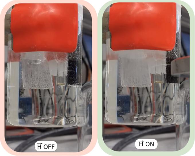 호세 갈란 마스카로스 스페인 카탈루나 화학 연구소 교수 연구팀은 자기장을 활용해 수소 전기분해 효율을 최대 2배까지 높일 수 있다고 밝혔다. 자기장을 가을 때(오른쪽) 수소 기포가 더 많이 발생하는 것을 볼 수 있다. 카탈루냐화학연구소 제공