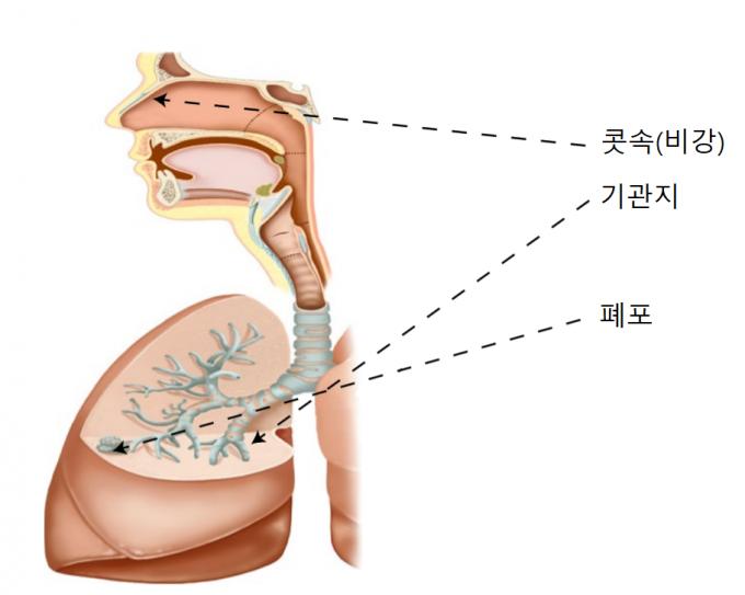 네이처 메디신 제공