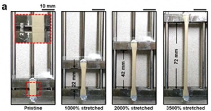 연구팀이 개발한 소재는 35배 이상 당겼을때도 끊어지지 않을 뿐 아니라 전기 전도도도 오히려 좋아졌다. KIST 제공