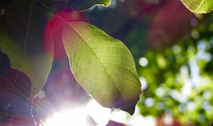 인공광합성이란  태양빛만을 이용해 이산화탄소로부터 유용한 화합물을 만드는 시스템이다. 픽사베이